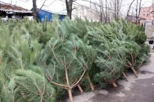 Сколько стоит новогодняя елка 2015?