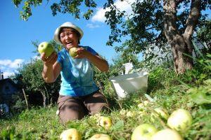 В Запорожье стартует дачный сезон