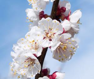 Холодная весна может оставить жителей Запорожья без фруктов и ягод