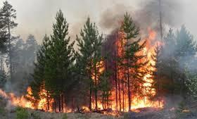 Пожар вокруг ЧАЭС усилился