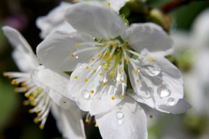 В апреле дожди превысили норму вдвое