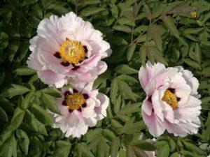 Ботанический сад похвастался цветущим долгожителем