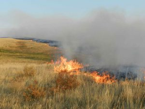 В Запорожской области все чаще горят степи