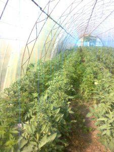 Запорожский фермер выращивал