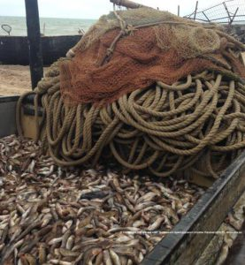 В Запорожской области задержаны браконьеры с уловом на 860 тысяч гривен