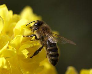 Запорожские власти обеспокоились здоровьем пчел