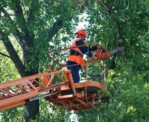 «Основание» заплатит «Зеленстрою» 4 миллиона за снос деревьев