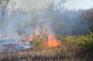 С пожарами в Запорожье боролись 80 бойцов МЧС