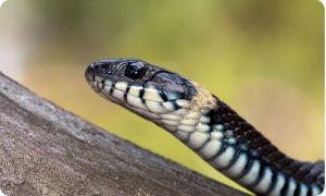 Запорожье обеспечено сывороткой от змеиного яда