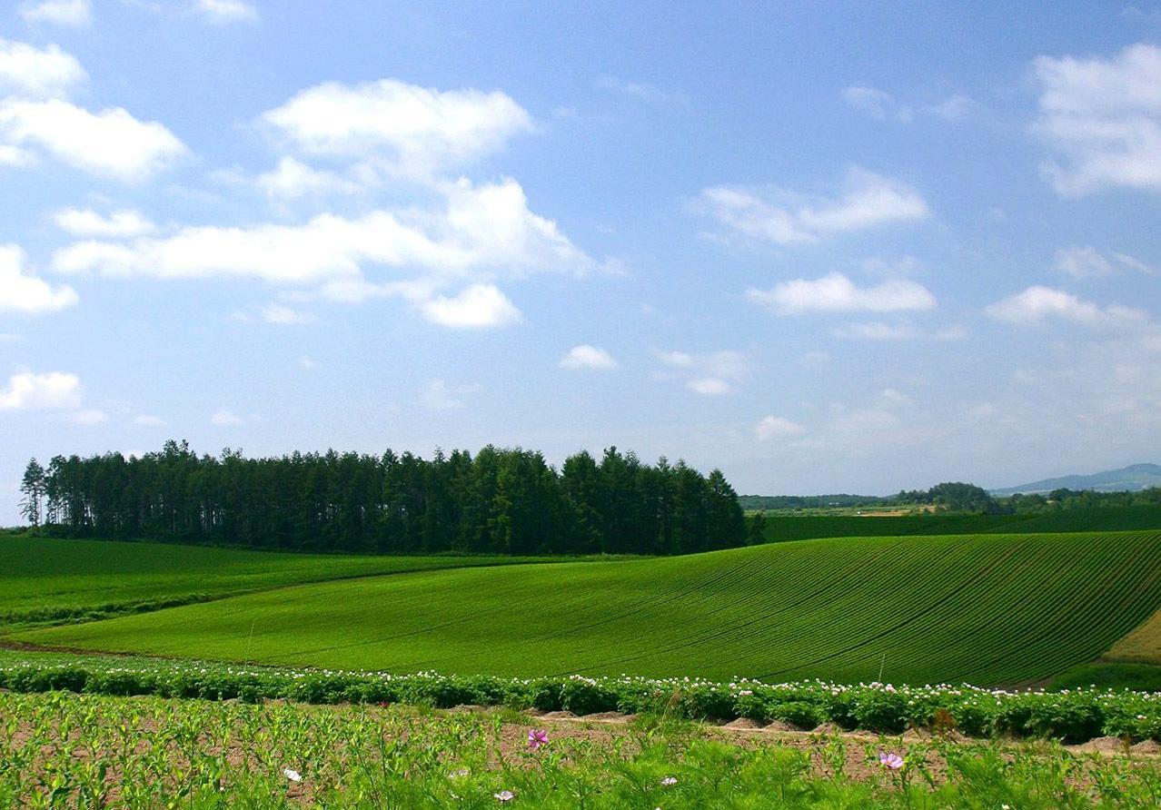 В Запорожской области незаконно засеяли 77 гектаров земли
