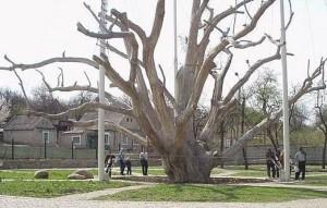 Комплекс «Запорожский дуб» перейдёт в управление городского департамента образования