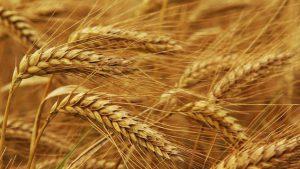 Аграрный сектор Украины работает лишь вполовину возможностей