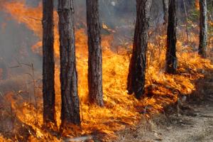 В Луганской области пожарные тушили лес под обстрелами боевиков