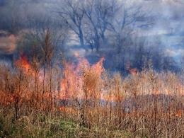 В Запорожской области установили пятый класс пожарной опасности: в регионе произошло уже 327 пожаров в экосистемах