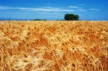 Запорожские аграрии стали платить больше налогов