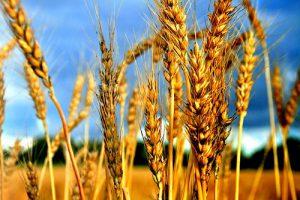 В битве за урожай в Запорожской области участвуют даже правонарушители