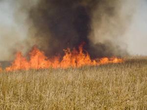 Пожары в Запорожской пылали на 119 гектарах