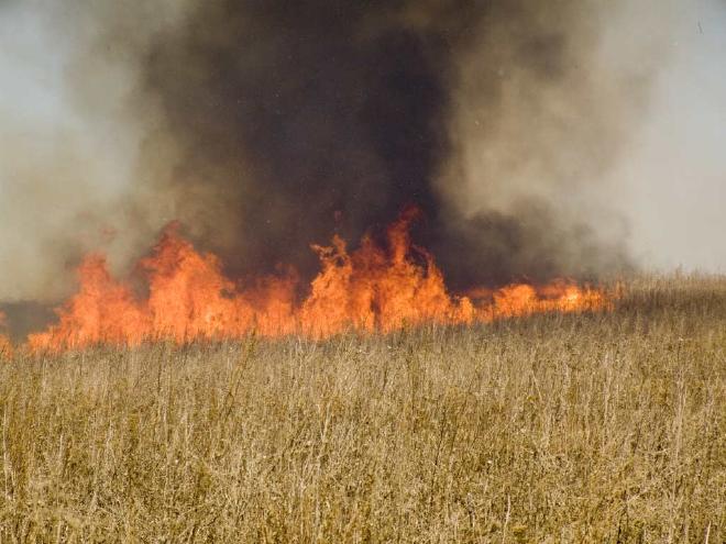 В Запорожье произошел масштабный пожар в Коммунарском районе: огнем охватило два гектара