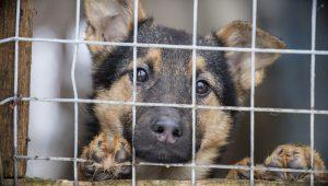 Кушугумский приют для животных могут закрыть из-за отсутствия денег