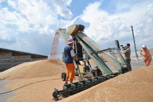 Цифра дня: 2 млн 603 тыс тонн зерновых собрали запорожские аграрии
