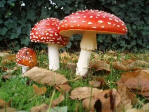 Медики вновь предостерегают запорожцев от грибных отравлений