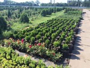 На коммунальном предприятии «Запорожзеленхоз» установят системы видеонаблюдения