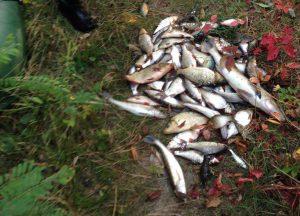 Запорожский браконьер нарыбачил на 11 тыс. грн
