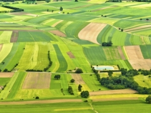 В Запорожской области продали земельные участки на 15 млн грн