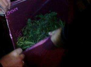 У жителя Запорожья изъяли 10 кг марихуаны