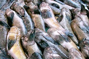 В Запорожской области рыбак незаконно порыбачил на 100 тыс. грн