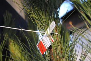 Почем елки в Запорожье