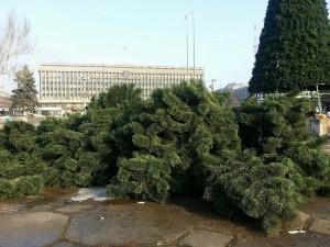 Областные чиновники удивят запорожцев живой елкой
