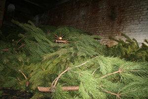 Запорожские полицейские взялись за елочных браконьеров