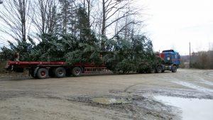 Как в Запорожье везли 24-метровую елку