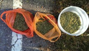 В Мелитополе собрали «урожай» конопли и марихуаны