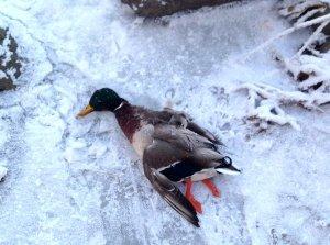 В Запорожье разыскивают мужчину, который убивал птиц на Хортице