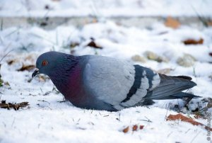 На запорожской Хортице прошла акция по подкормке птиц