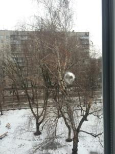 В Харькове неизвестные обстреляли школу