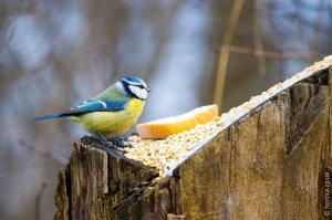За две недели запорожцы дважды кормили птиц