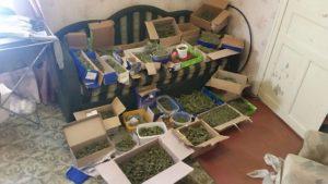 Житель Запорожья хранил дома 8 кг марихуаны