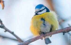 Запорожцев зовут на Хортицу, чтобы накормить птиц