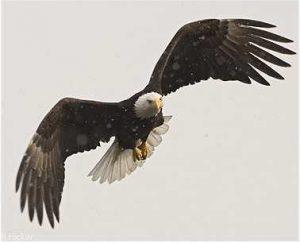 В Запорожье редкая птица запуталась в браконьерских сетях