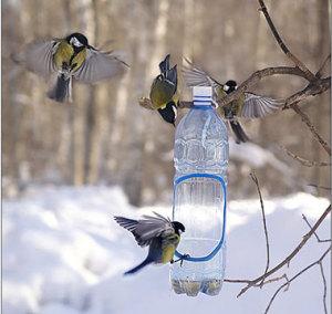 Запорожцев зовут делать кормушки и кормить птиц
