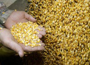 Цифра дня: 30,5 тыс – столько запорожцев работают в сельском хозяйстве