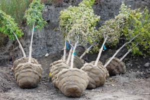 В Бердянске жители просят у власти дрова, те в свою очередь обещают высадить много деревьев