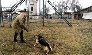 В исправительной колонии розыскные собаки сдали «экзамен» на профпригодность