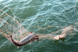За два дня запорожские браконьеры нанесли водоемам ущерб в 2,2 тыс гривен