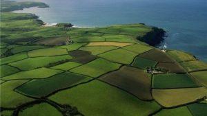 Запорізька область знаходиться в лідерах серед усіх регіонів з незаконного продажу землі