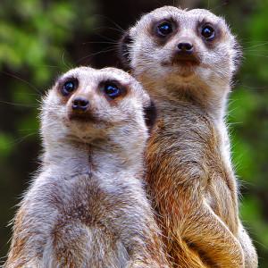 В Бердянском зоопарке появились новые жители