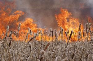 Горел камыш: В урочище Вырва огонь уничтожил 1000 кв.м. сухостоя